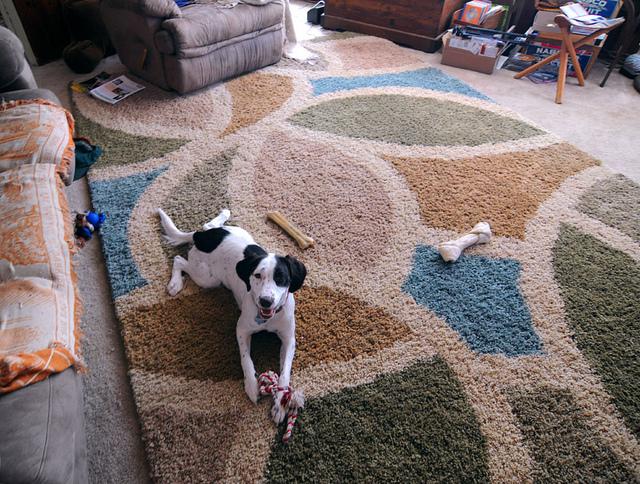 Dog urine in carpet home remedy