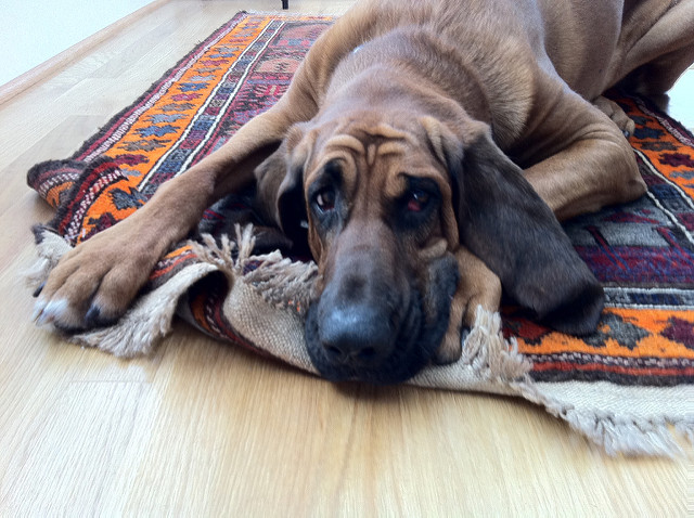 Three reasons your puppy loves your area rugs sedona az solutioingenieria Gallery